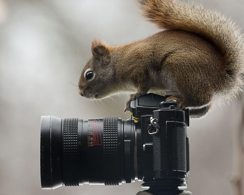 squirrel-camera-sit-curiosity-1280x1024